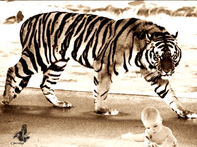 http://i15.servimg.com/u/f15/11/01/95/86/tigre10.jpg