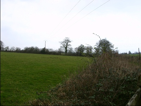 coline13.jpg
