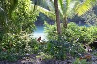 Le jardin de Dieu, île de Kakaban