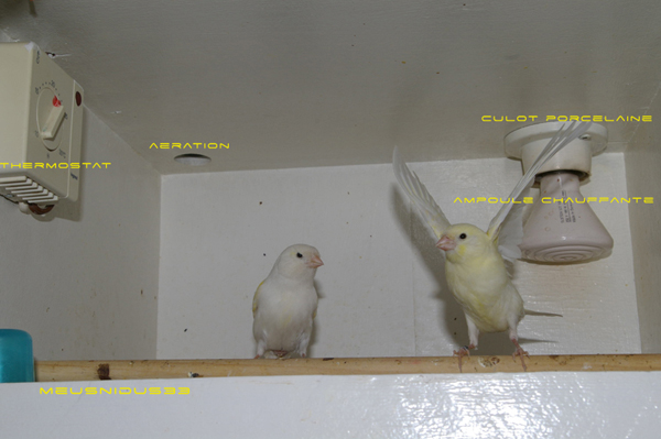 cage elevage canaris