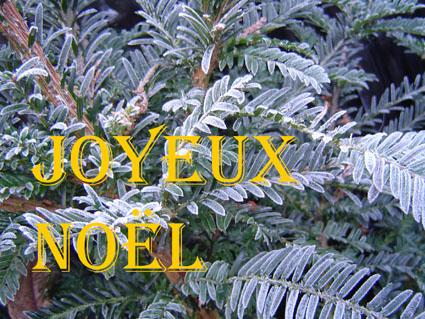 http://i15.servimg.com/u/f15/11/35/88/35/joyeux10.jpg