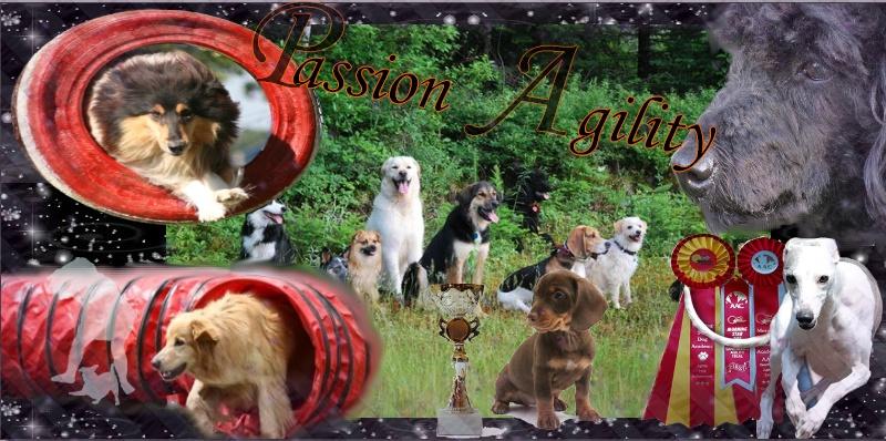 Passion-Agility (PA)
