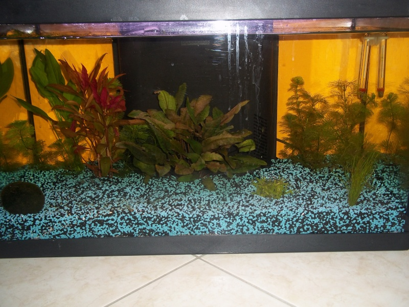 comment nettoyer aquarium 60l