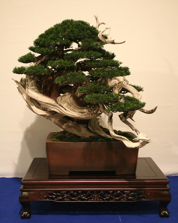 top unique bonsai trees gallery top unique bonsai trees