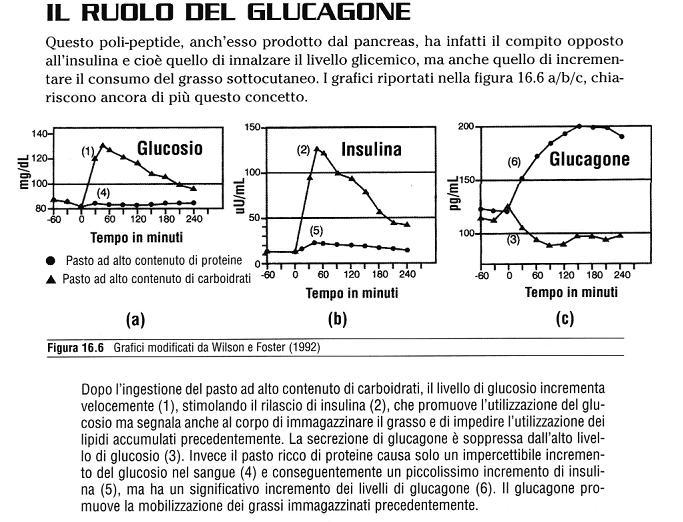 glucag10.jpg