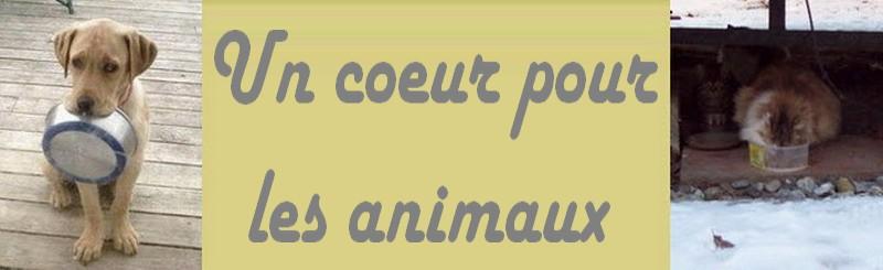 Un coeur pour les animaux