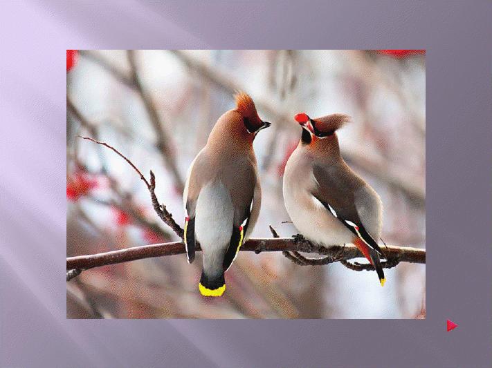 Pour les amis des oiseaux ninnenne - Pour effrayer les oiseaux ...