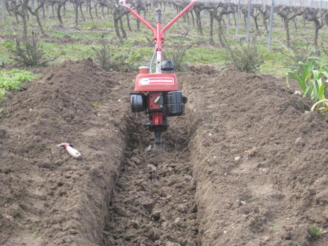 Commentaires sur le combi motostandard terra page 4 - Comment planter des asperges ...