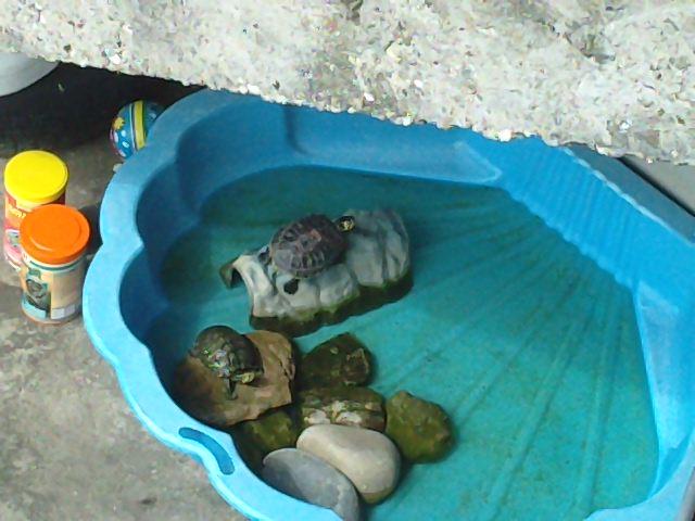Design bassin pour tortue aquatique paris 37 paris for Achat poisson rouge paris 15