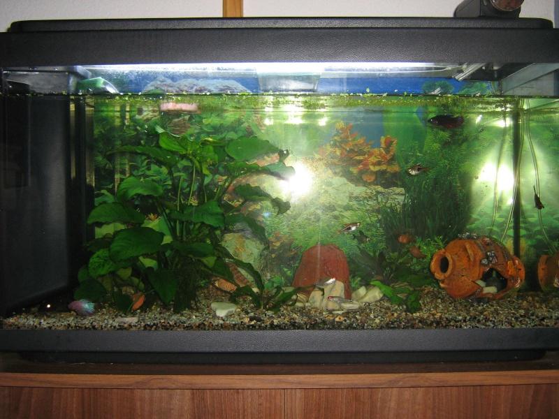 Vends echanges aquarium et divers accessoires 07 for Accessoire aquarium