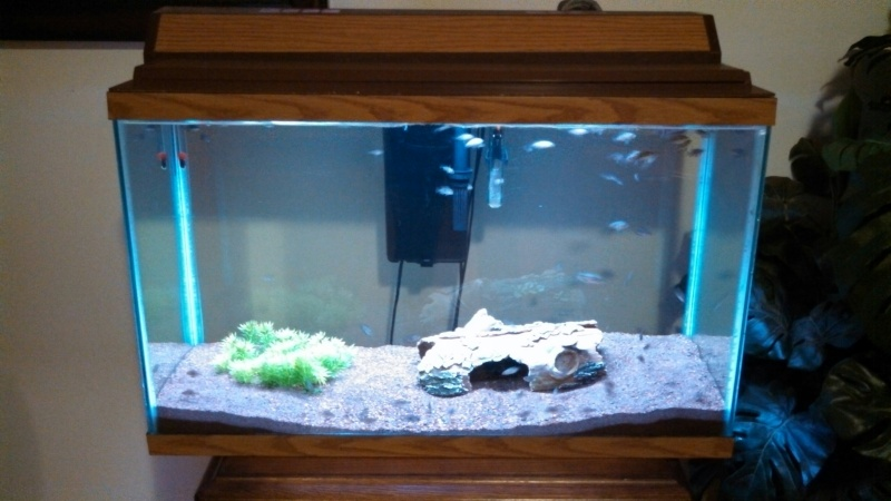 55 gallon fish tank trim 55 gallon large 2017 fish for 55 gallon corner fish tank